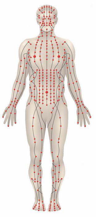 De orgaanmeridianen aan de voorzijde van ons lichaam