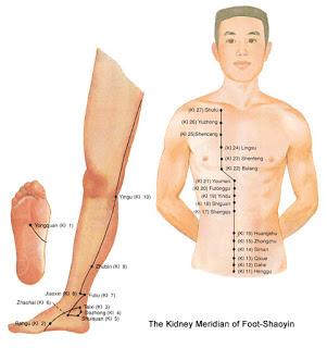 De Niermeridiaan die vanaf de voetzool naar het sleutelbeen loopt