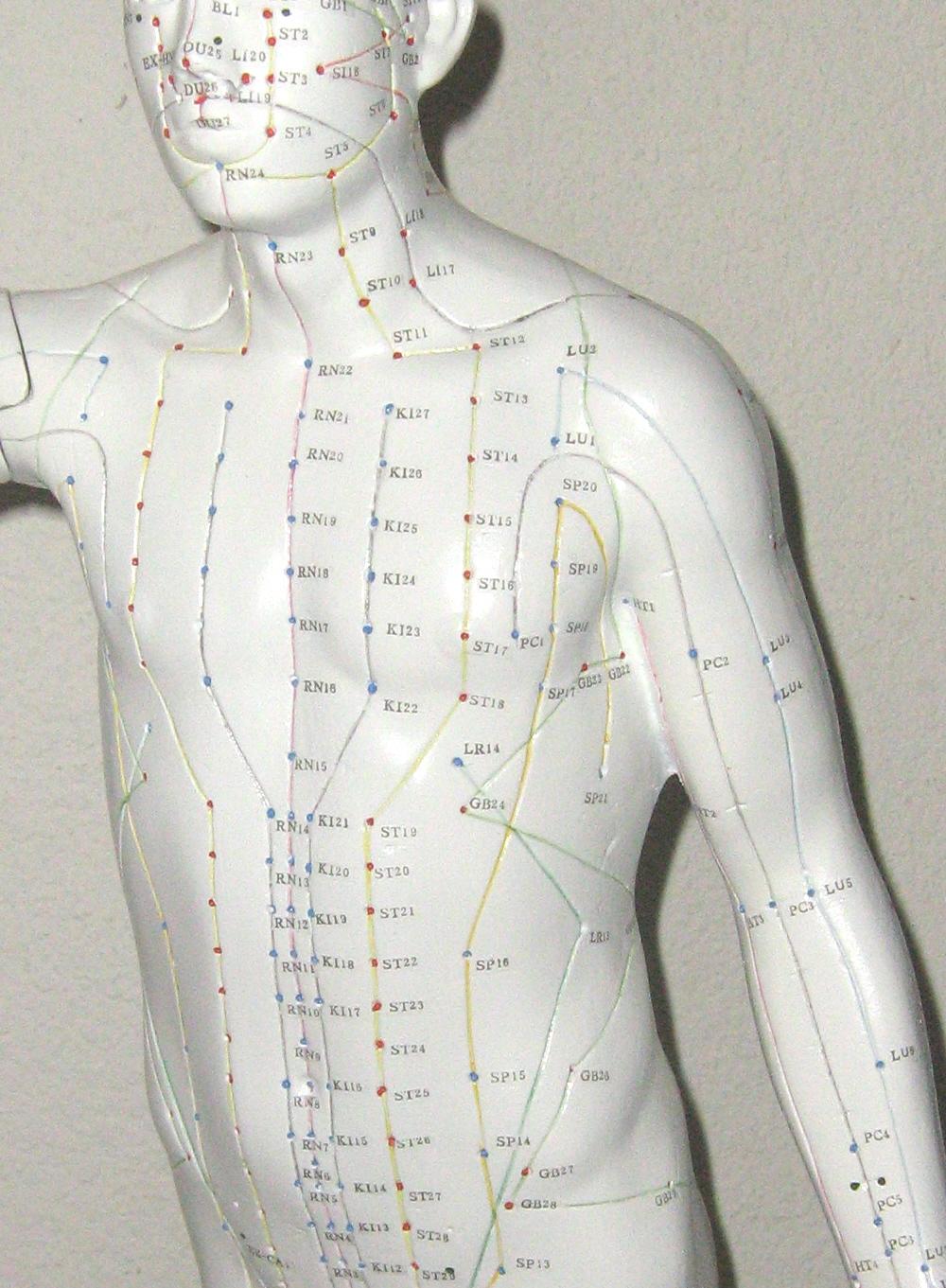 De Acupunctuurpunten van borst en buik