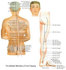 De Blaasmeridiaan die over rug en benen loopt