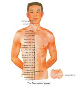 De Conceptiemeridiaan die over de voorkant van het lichaam loopt